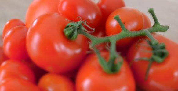Tolle Tomatensamen – und jetzt?
